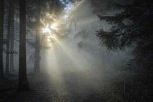 Луч солнца в лесу